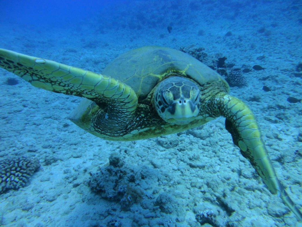 oahu-scuba-diving-05